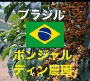 ブラジル アマレロブルボン ボンジャルディン農園 珈琲生豆200g焙煎してません