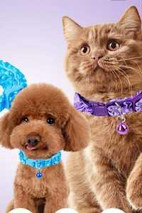 猫、犬用首輪&チョーカー!赤