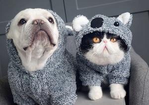 1円スタート 新品 ペット用洋服 コアラ パーカー もこもこ素材 フード付き 犬用 猫用 ドッグウエア ねこ お散歩 動物 アニマルコーデ 灰色