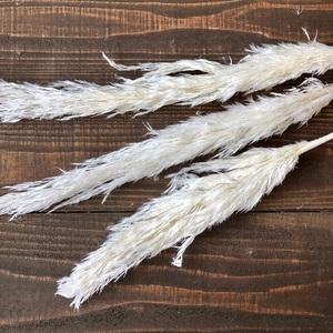 プル―ムリード 3本 ホワイト ドライフラワー花材 そのままインテリアやスワッグ 撮影小道具などに パンパスグラスを好きな方におススメ