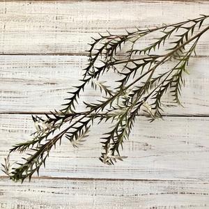 グレビレアアイバンホー 1本 美しいシルエットでそのまま飾れる高品質ドライフラワー 花材 インテリアやスワッグ 撮影小道具などに