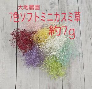大地農園☆7色 ソフトミニカスミ草☆約7g