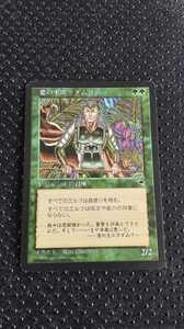 MTG 葉の王エラダムリー TMP 再録禁止 日本語版