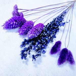 ●お試し4種セット 紫系 ポアプランツ ハニーテール ボタンフラワー ブリーザ テラリウム 3Dハーバリウム キャンドル 4●