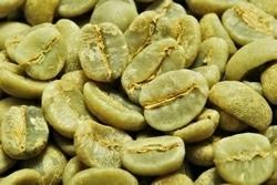 【1㎏】コーヒー生豆 タンザニア エーデルワイス AA 生豆 プレミアムコーヒー 自家焙煎 送料無料