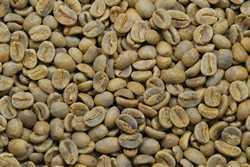 【10㎏】コーヒー生豆 エルサルバドル ビクトリア農園 生豆 プレミアム 自家焙煎 こだわりコーヒー アロマ 送料無料
