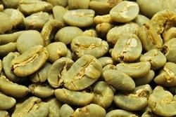 【10㎏】コーヒー生豆 スラウエシ ママサ プレミアム プレミアムコーヒー こだわりコーヒー カフェ 送料無料