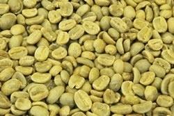 【1㎏】コーヒー生豆 グァテマラ ハニー 生豆 プレミアムコーヒー 自家焙煎 送料無料