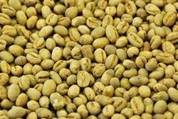 【1㎏】コーヒー生豆 ブラジル ショコラピーベリー 生豆 プレミアムコーヒー 自家焙煎 こだわりコーヒー 送料無料