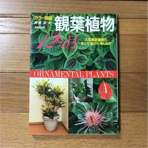 観葉植物12ヵ月