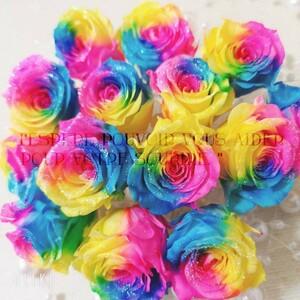 加工花材* レインボーローズ プリザーブドフラワー 花材