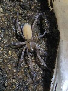 蜘蛛 1匹  ③