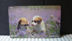 【使用済】★NTTテレホンカード・ 多穴券◆子犬2匹★