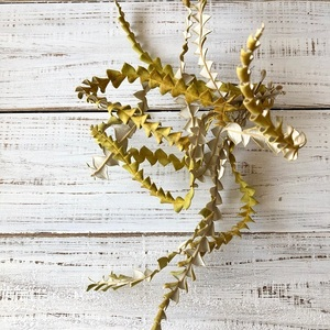 「バンクシアの葉っぱ」カーブ10本セット そのまま飾って可愛いドライフラワー 花材 インテリアやスワッグ 撮影小道具などに