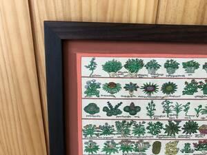 チベット薬草タンカ チベット医学 チベット仏教 オリジナルローズウッド額縁