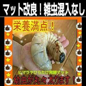 【改良版】雑虫混入99%なし!ヒマラヤひらたけ発酵マット☆カブトムシ・クワガタの幼虫の餌、産卵マットに!栄養価抜群!栄養添加剤入り!