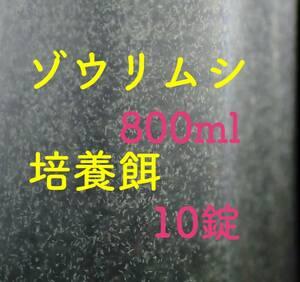 ゾウリムシ 800ml メダカ 針子の餌 【KASUMIめだか】