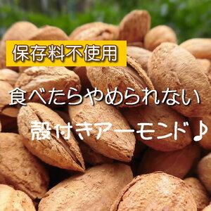 【CT】 ナッツ 殻付きアーモンド 50g アーモンド 殻付き ロースト ロースト 殻付き 食塩
