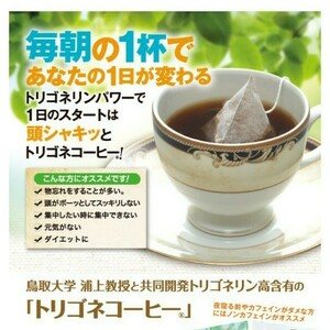 トリゴネコーヒー 澤井珈琲 ティーパック ドリップコーヒー