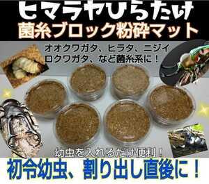 プリンカップ入り6セット!ヒマラヤひらたけ菌床粉砕マット!オオクワガタなどの初令幼虫や割出し直後の個別飼育に最適!栄養価抜群です