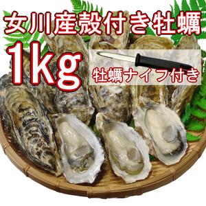 【産地直送】冷凍殻付き牡蠣 加熱用 Lサイズ 1kg(8個前後) 宮城県女川産 牡蠣ナイフ、軍手付き COL-OO1_21