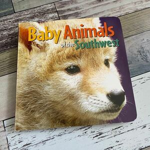 Baby Animals of the Southwest 洋書 英語 ボードブック 絵本