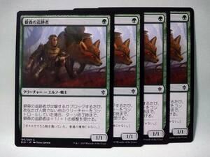 C緑 僻森の追跡者 日本語4枚セット