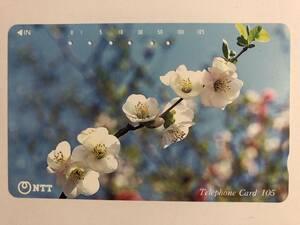 【使用済/両面に少々傷有】<テレホンカード> 花(7)(105度/穴6孔)