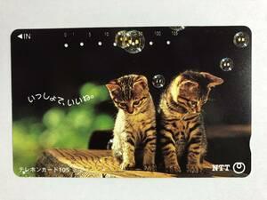【使用済/両面に少々傷有】<テレホンカード>仔猫2匹(105度/穴7孔)※風景・景色・動物・小動物・子猫・ねこ・こねこの商品画像