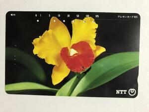 【使用済/両面に少々傷有】<テレホンカード>花(10)(105度/穴6孔)