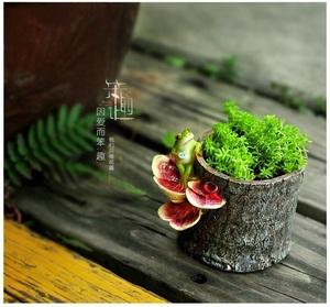 CSN573#◎目玉品◎植木鉢 プランター 多肉 観葉植物 盆栽ポット かえる カエル おしゃれ 可愛い ガーデニング プレゼント