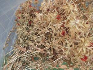 ドライフラワー スワッグ リース作り べにばな 紅花 ベニバナ 和風 紅ばな 和室に