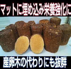 椎茸廃菌床ブロック☆クワガタ幼虫の餌、産卵木の代わりに!クヌギ100% 発酵マットに埋め込むと栄養強化になりカブト幼虫がサイズアップ!