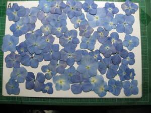 A-4  紫陽花 ブルー