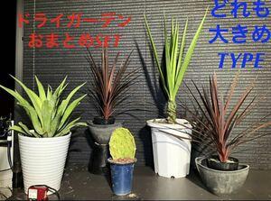 SALE【ドライガーデンおまとめ特別SET保証付き配送含む(°▽°)
