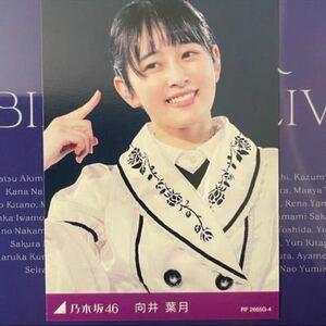 乃木坂46 8th YEAR BIRTHDAY LIVE カード 向井葉月