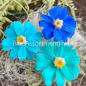 ジニア ブルーアソート 3輪 春夏花材 ハーバリウム花材 花材 加工花材 ジニア小