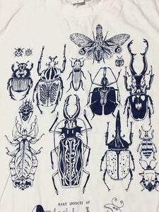 特価 世界の昆虫 標本Tシャツ  Lサイズ aroundaglobe 甲虫 珍虫 クワガタ カブトムシ 怪虫 オオキバウスバカミキリ コノハムシ