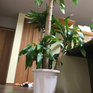 観葉植物です