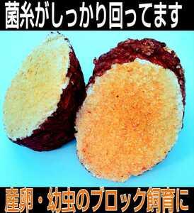 椎茸廃菌床ブロック☆発酵マットに埋め込むと栄養強化になりカブト幼虫がサイズアップ!クワガタ幼虫の餌、産卵木の代わりに!クヌギ100%