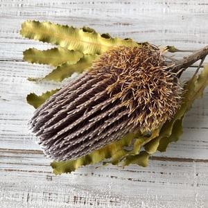 「バンクシア メンジェイシィ」57cm1本 そのまま飾れる高品質ドライフラワー 花材 インテリアやスワッグ 撮影小道具などに