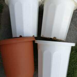 植木鉢 プラスチックポット 長鉢  鉢 プラ鉢 大型