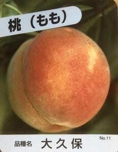 大久保桃 接木苗木