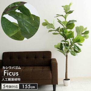 フェイクグリーン 観葉植物 人工 フィカス カシワゴム 高さ 155cm 造花 インテリア 目隠し M5-MGKFGB90088