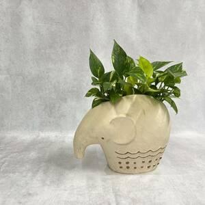 ポトスゴールデン&ライム ゾウさんの陶器鉢に 植物 観葉植物 プレゼント インテリア