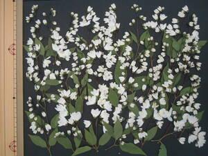 [ быстрое решение * вдавлено цветок материалы ]himeutsugi(.. дерево ) ④