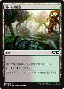 MTG 穢れた果樹園 マジック:ザ・ギャザリング 基本セット2019 M19-251 | ギャザ 日本語版 土地 土地