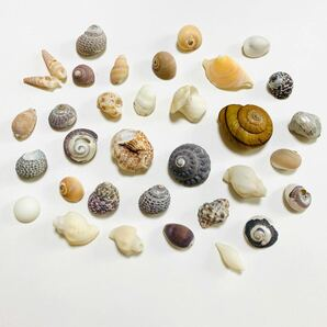 渦巻き貝 貝殻 シェル カタツムリ貝 夏 ビーチ 海 サマー シーアイテム