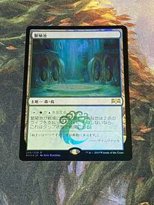 MTG 繁殖池 日本語 フォイル 1枚