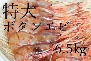 【特大!】ボタンエビ 6.5kg 急速凍結 お刺身用 北海道直送 海老 えび 牡丹 ぼたん お中元 お歳暮 母の日 父の日 敬老